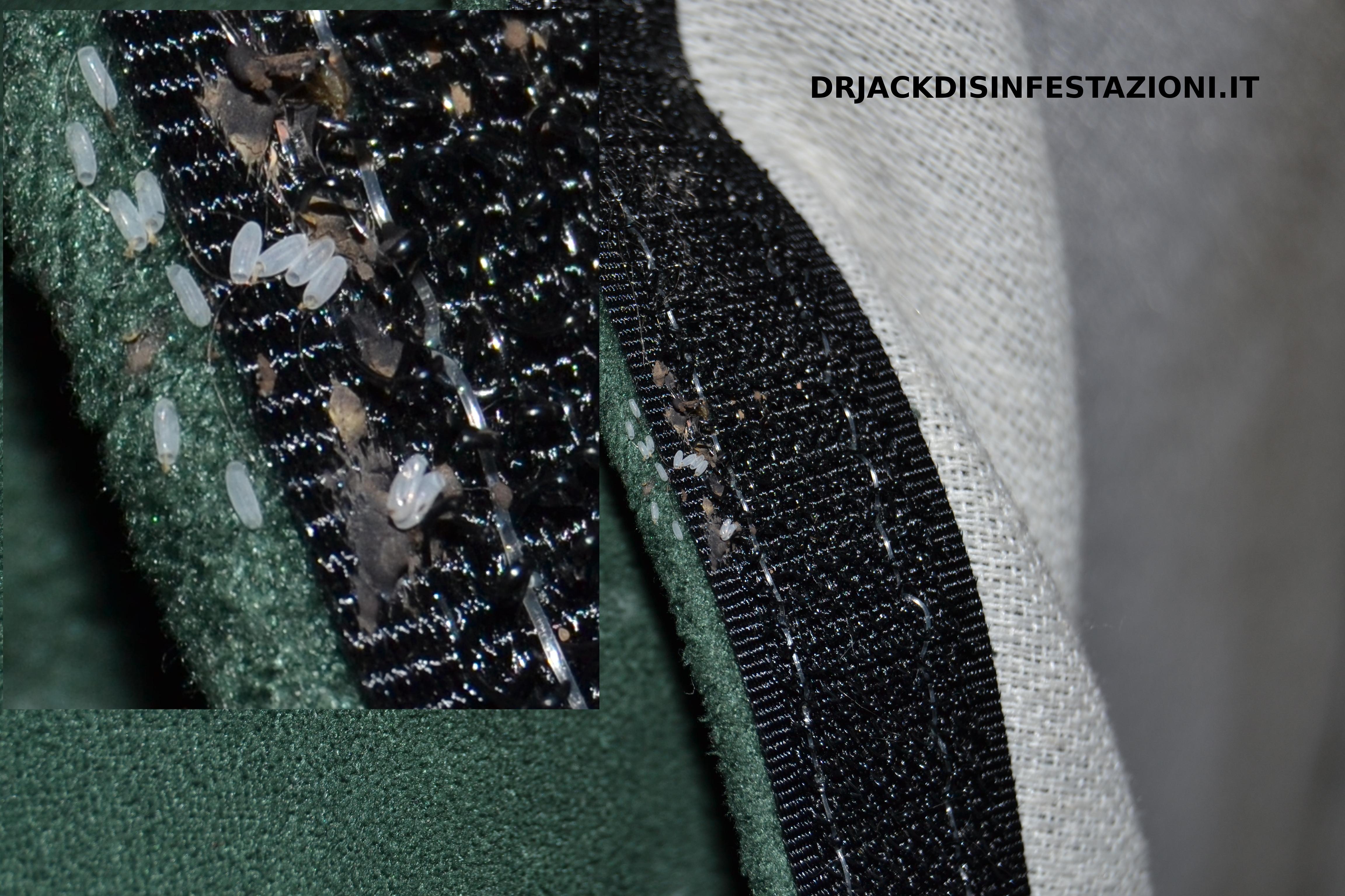 Cimici materasso 28 images cimici da letto come debellarle come eliminare le cimici da - Eliminare le cimici da letto ...